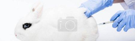 Ausgeschnittene Ansicht eines Tierarztes, der Kaninchen Spritzen auf weißem Hintergrund gibt, Banner