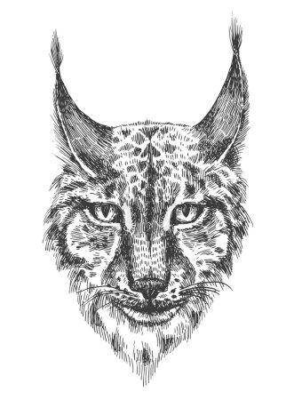 Illustration pour Tête de beau lynx. Illustration en noir et blanc avec tête de chat sauvage avec dents nues. Croquis dessiné à la main. Peinture à l'encre. Élément de design utile pour imprimer pour t-shirt . - image libre de droit