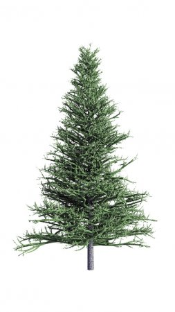Christmas fir isolated on white background