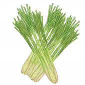 Unique style illustration of lemon grass isolated in white background