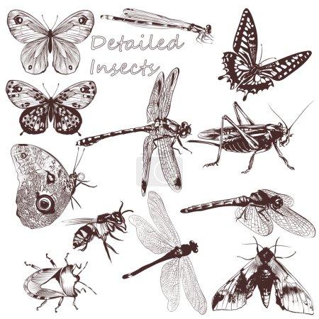 Illustration pour Ensemble de papillons vectoriels détaillés pour la conception - image libre de droit