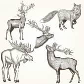 Set of vector detailed animals for design