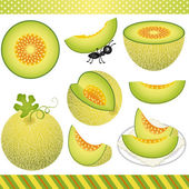 Scalable vectorial image representing a cantaloupe melon digital clipart isolated on white