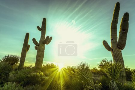 Photo for Epic desert sunset over valley of the Sun, Phoenix, Scottsdale, Arizona with Saguaro cactus in foreground. Plenty of space for copy, banner text.. - Royalty Free Image