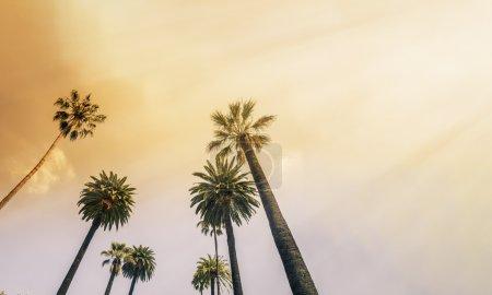 Photo for Los Angeles, West Coast Palm Tree Sunshine - Royalty Free Image