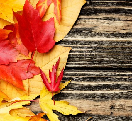 Leaves on wooden background