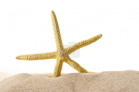 Sea star in sand