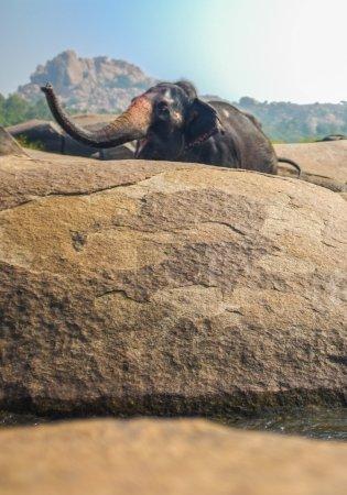 éléphants dans la rivière