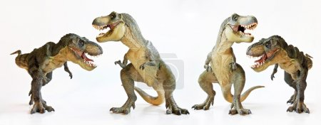 A Tyrannosaurus Quartet on a White Background