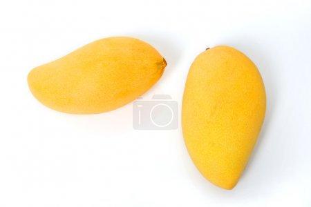 Two ripe golden mangoes on white