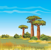 Green baobabs and yellow grass on a blue sky African vector landscape