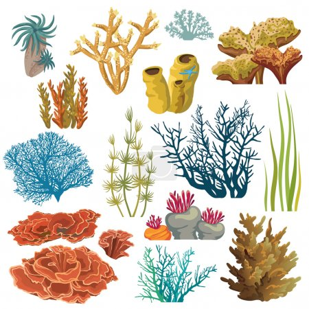 Set of corals and algaes.