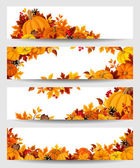 Vector banners with orange pumpkins and autumn leaves