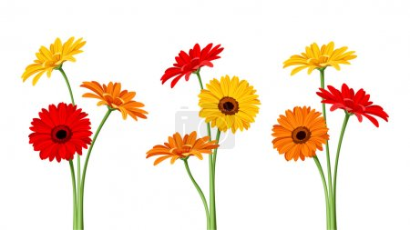 Vector colorful gerbera flowers with stems isolate...