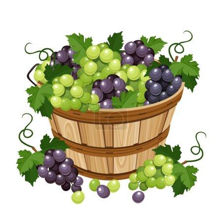 Illustration pour Panier en bois vectoriel noir et raisins isolé sur fond blanc . - image libre de droit