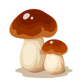 Two cep mushrooms Vector illustration