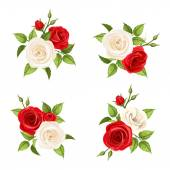 Bouquets of red and white roses Vector set of four illustrations