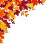 Background with autumn colorful leaves Vector illustration