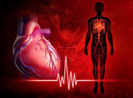 Photo pour Illustration du diagramme de battement de coeur humain - image libre de droit
