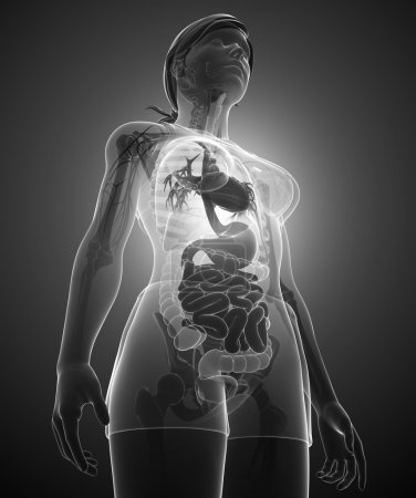 Female x-ray digestive system artwork