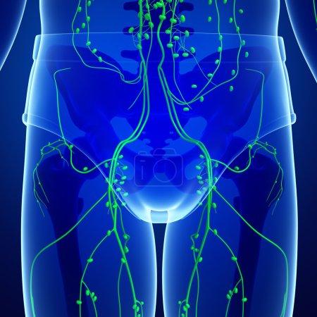 Photo pour Illustration du système lymphatique du corps masculin - image libre de droit
