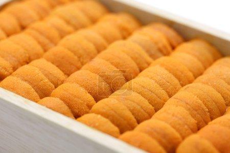 Japanese green sea urchin roe, ezo bafun uni, sush...
