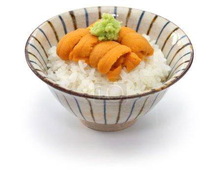 Japanese green sea urchin roe, ezo bafun uni...