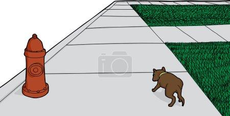 Lost Dog on Sidewalk