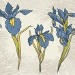 Постер, плакат: Set beautiful irises flowers on hand drawn background