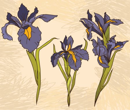 Illustration for Set beautiful irises flowers on hand drawn background, vector illustration - Royalty Free Image
