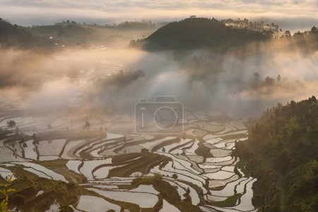 Rice fields on terraced in surice, China...