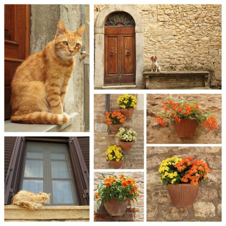 Dog, cats and flowers