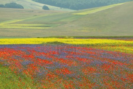 Multicolor fields with wild flowers