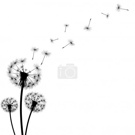 Black silhouette with flying dandelion buds