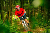 Mountain Biker Riding Down Forest Trail