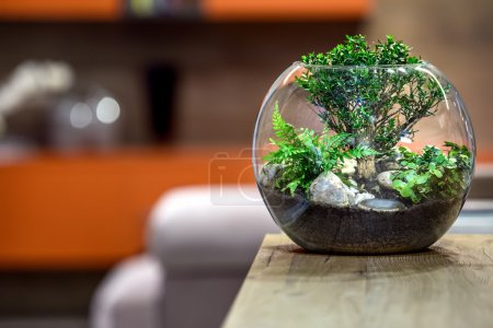 Photo for Green plant on wooden table. House decoracion. - Royalty Free Image