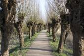 path in nature with willows