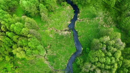 Aerial. Drone fly above the river, green meadow and forest. Spring nature landscape. Top view from drone.
