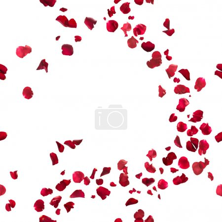 Photo for Seamless, red rose petals breeze, studio photographed in depth of field, isolated on white - Royalty Free Image