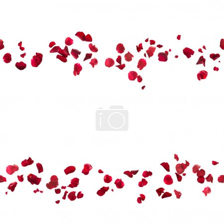 Photo for Repeatable, hovering red rose petal lines, studio photographed and isolated on white - Royalty Free Image