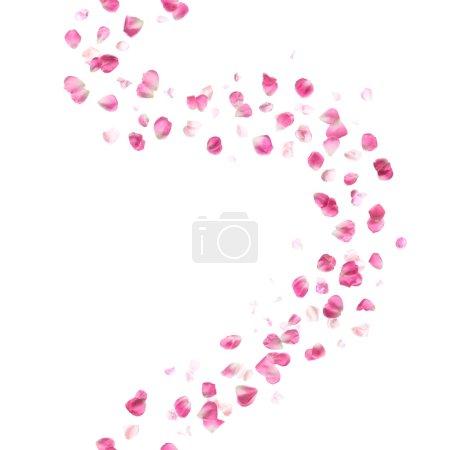 Seamless Pink Rose Petals Pattern