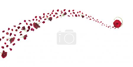 Red Roses and Petals Swirl