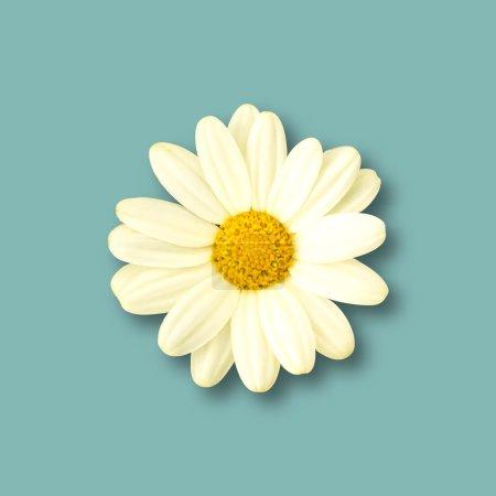 Realistic Daisy flower