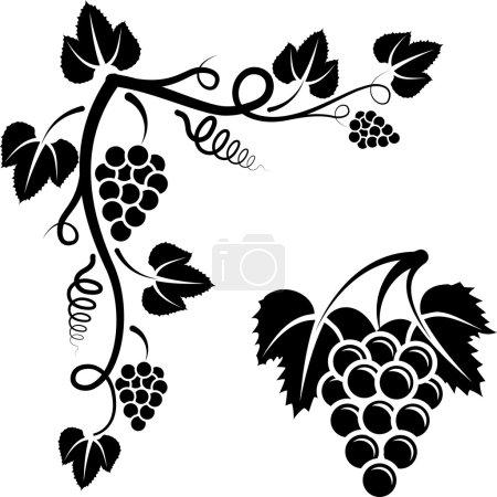 Illustration pour Bouquet de vigne et coin avec vigne - image libre de droit