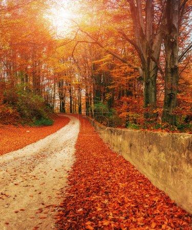 Photo pour Route sinueuse en automne paysage - image libre de droit
