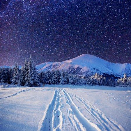 starry sky in winter snowy night