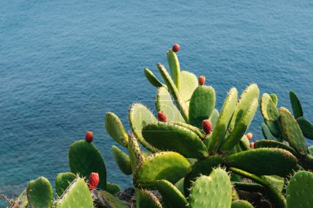 Mature couple Barbed cactus and fruit against blue water