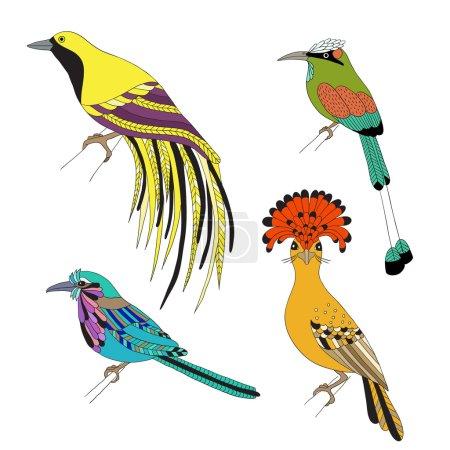 Set of tropical birds hand draw. Emperor Bird of P...