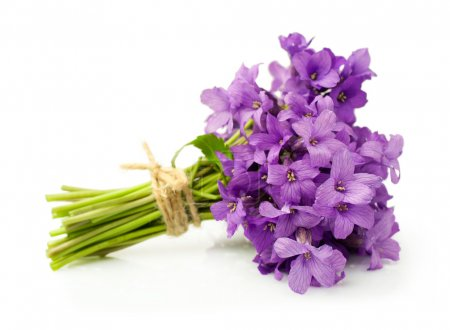 Photo for Bouquet of violets isolated over white - Royalty Free Image