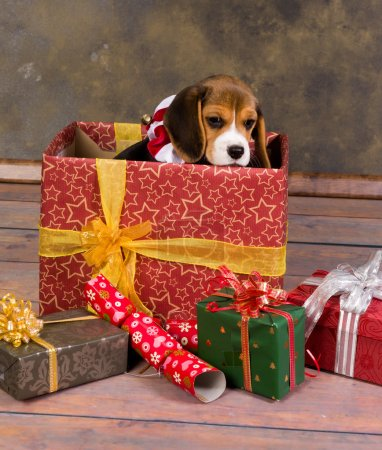 Beagle puppy christmas gift